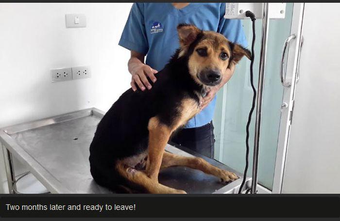 Leo The Dog Moves To Canada (11 pics)