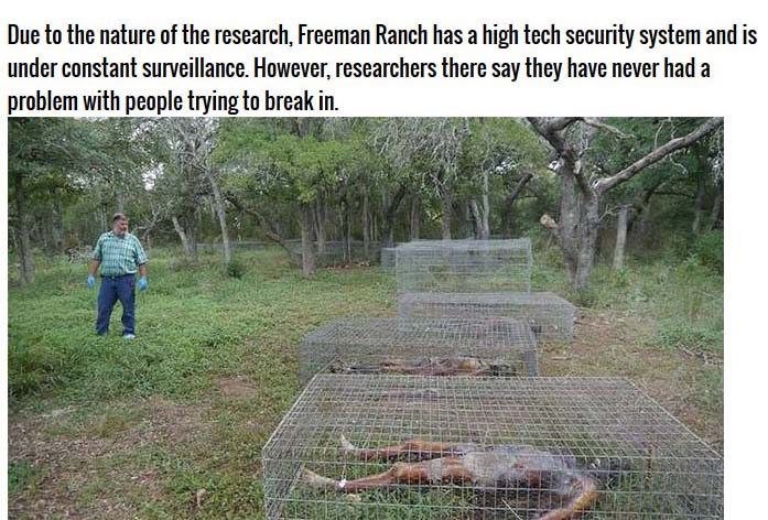 There's Something Strange About This Farm (10 pics)