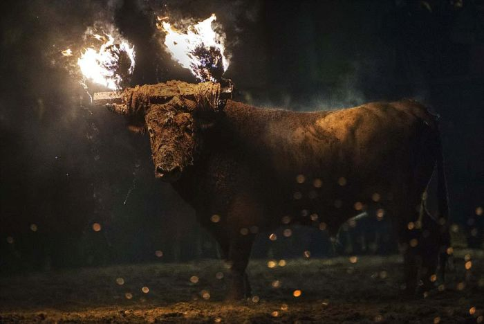 Live Bulls Are Being Set On Fire At This Spanish Festival (22 pics)