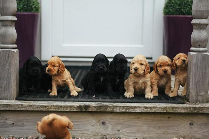 These Puppies Are Just Plain Adorable (44 pics)