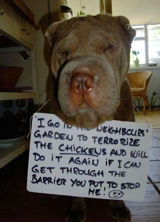 Dog Shaming Is Always Hilarious (33 pics)