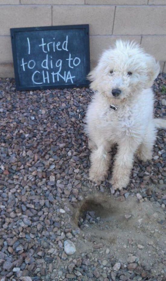 Dog Shaming Is Always Hilarious (33 pics)