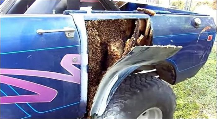 Huge Bees Nest Inside Of A Car (4 pics)