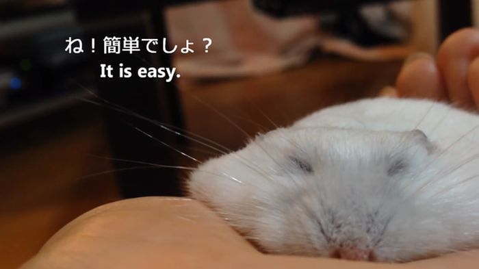 How to Make a Thin Hamster (11 pics)