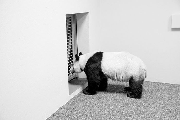 An Inside Look At Zoos From Around the World (36 pics)