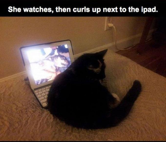 This Cat Lost Its Best Friend (10 pics)