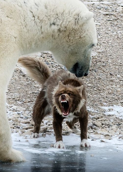 That's One Brave Dog (8 pics)