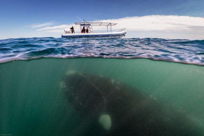 Εκπληκτικές φωτογραφίες του ζωής πάνω και κάτω από το νερό (50 φωτογραφίες)