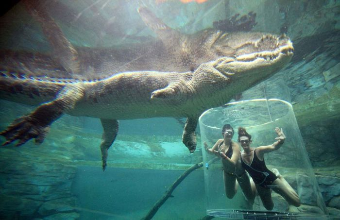 These Brave Men Came Face To Face With Crocodiles (12 pics)