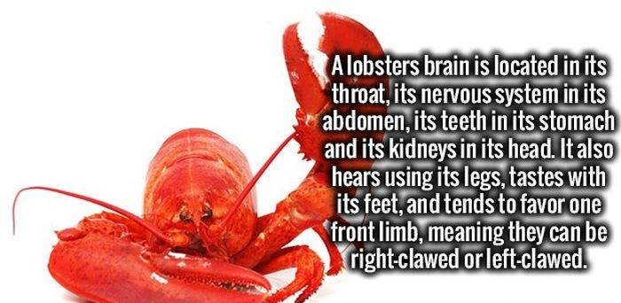 Get Ready To Feed Your Brain Fun Facts (34 pics)