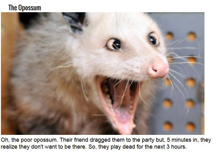 These Are Some Serious Party Animals (9 pics)