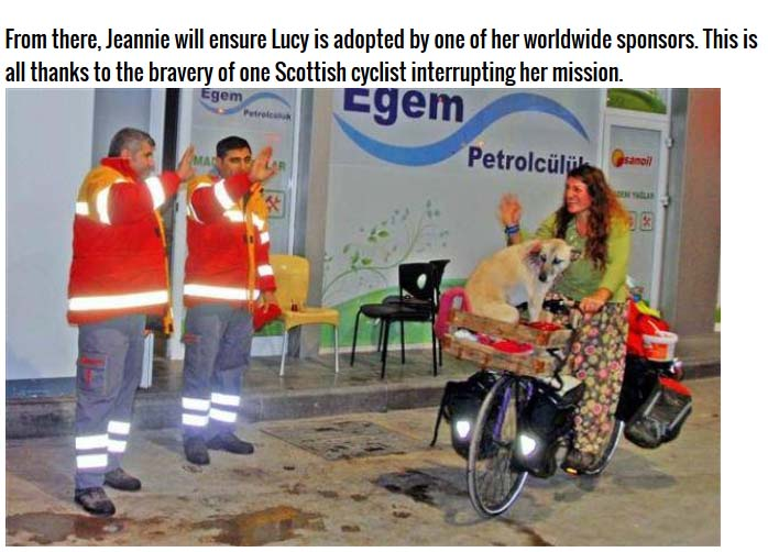 This Woman Did Something Incredible For A Stray Dog (5 pics)