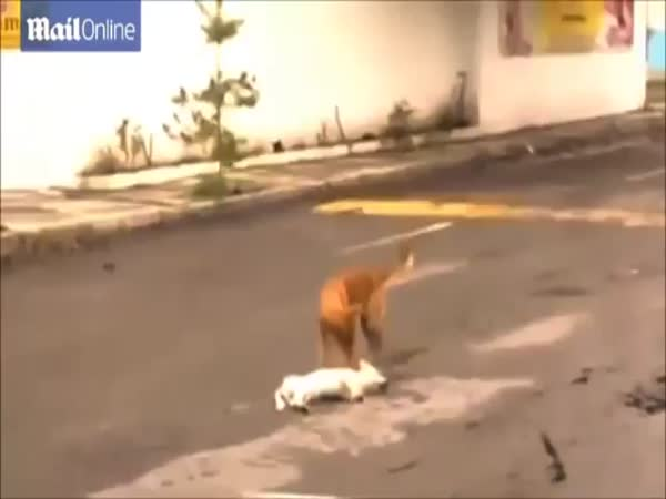 Dog Tries To Pull Fellow Dog Out Of Road