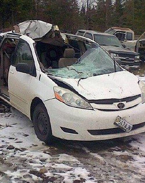 Man Survives Intense Moose Crash (6 pics)