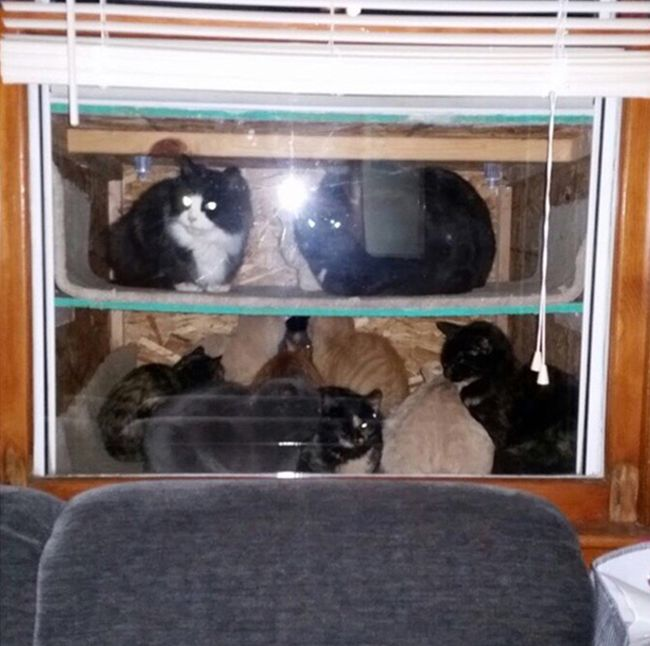 This Dad Gave Stray Cats A Place To Go On Thanksgiving (3 pics)