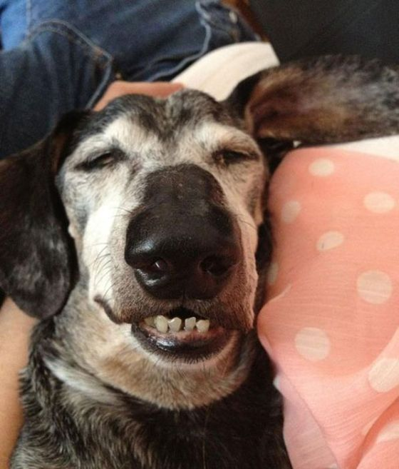Dogs Experiencing Thanksgiving Food Comas (21 pics)