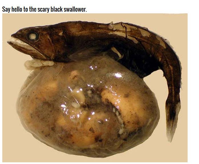 This Deep Sea Catch Is Very Impressive (7 pics)