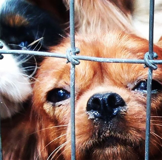 108 Abused Dogs Get Rescued From Breeding Farm (22 pics)