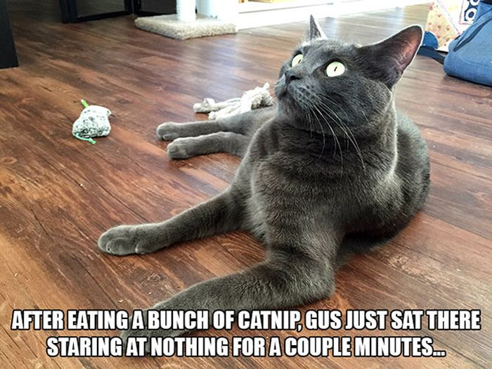 These Cats Have Taken Their Catnip Problem Way Too Far (25 pics)