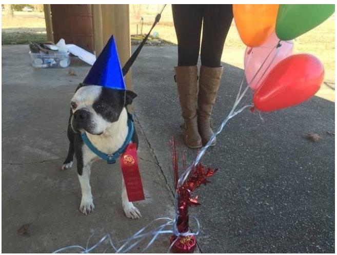 This Dying Dog Got A Farewell Party (11 pics)