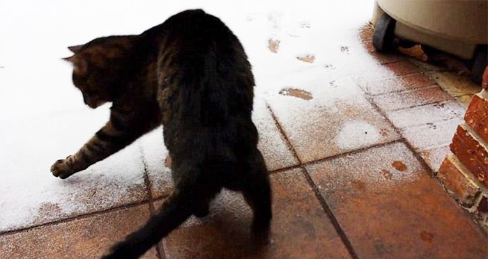 Animals Playing In The Snow For The Very First Time (55 pics)