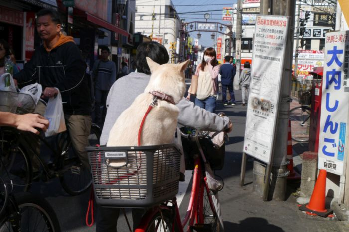 Dog Comes And Goes (17 pics)