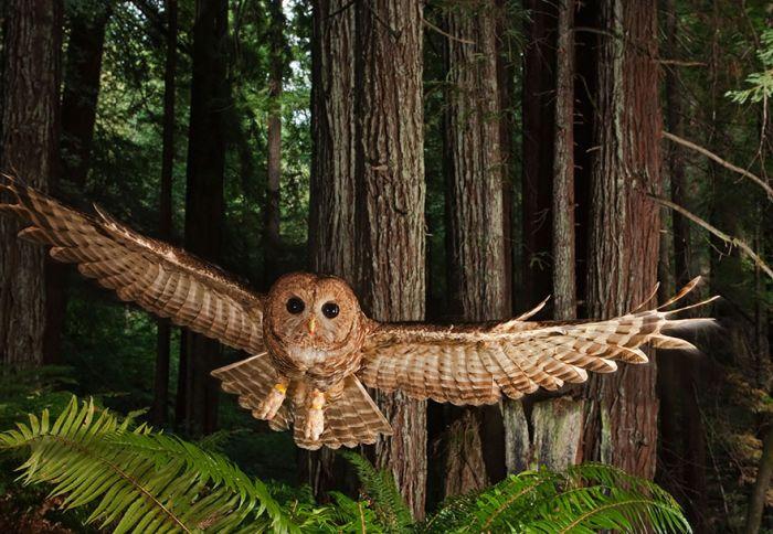 Intense Owl Moments Caught On Camera (44 pics)
