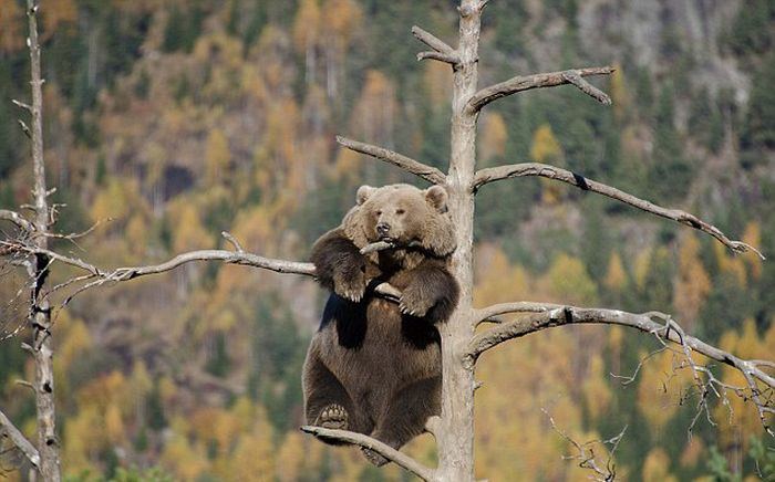 This Bear Has The Best View (7 pics)