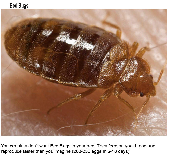 deadliest insect in the world - photo #30