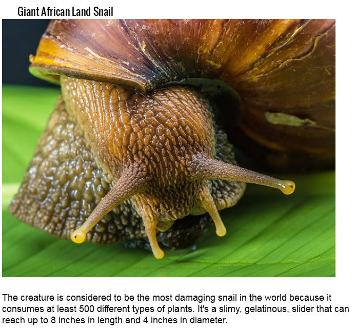 Dangerous Insects (25 pics)