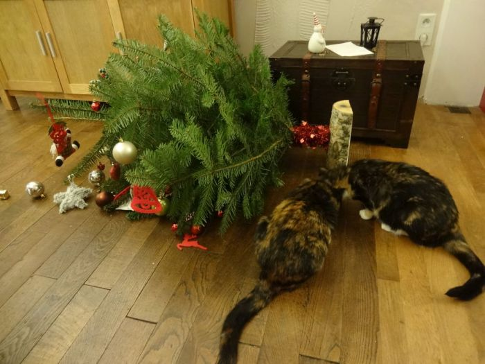 These Dogs And Cats Are Trying To Ruin Christmas (26 pics)