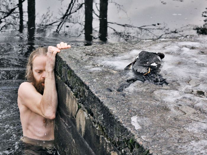 Norwegian Man Saves Duck From A Frozen Lake (4 pics)