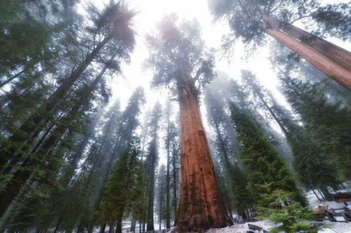 This Giant Tree Is A Sight To See (4 pics)