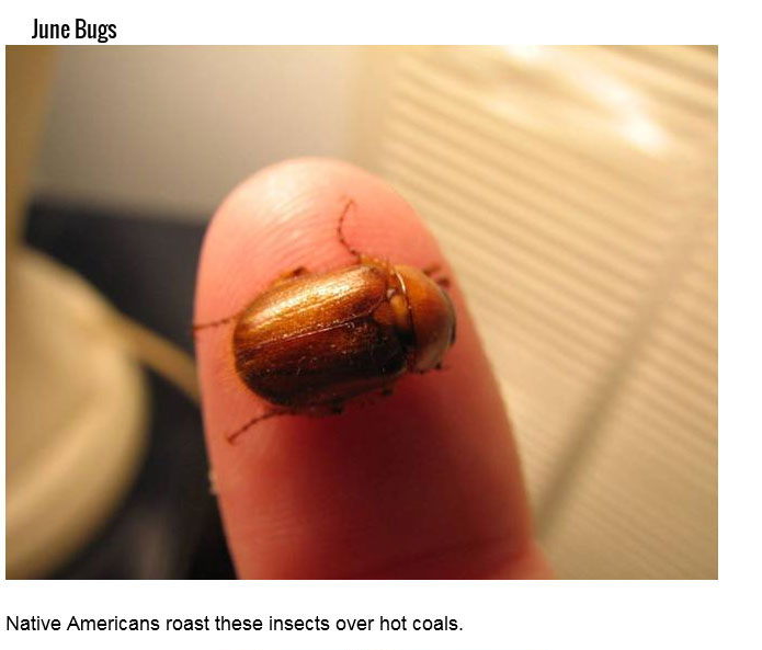 Just Because You Can Eat These 15 Insects Doesn't Mean You Should (15 pics)