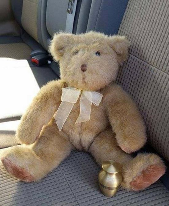 Teen Finds Shocking Surprise In A Thrift Store Teddy Bear (4 pics)