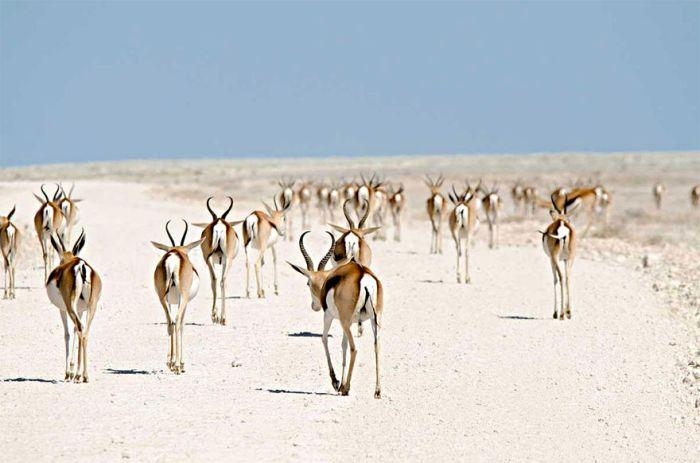 Amazing Photos Of Animals Migrating (33 pics)
