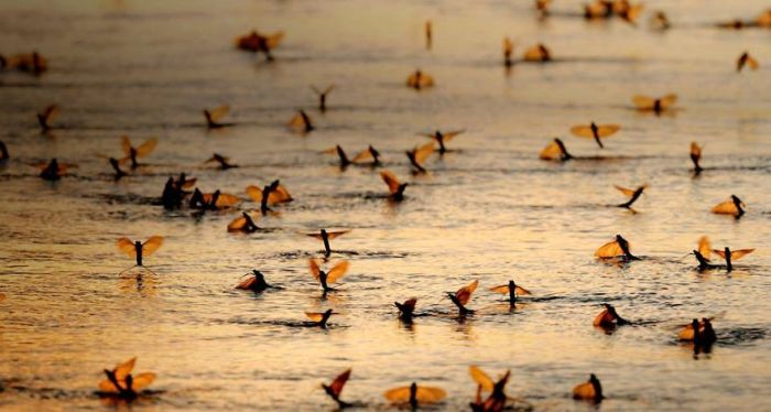 Amazing Photos Of Animals Migrating (33 pics)