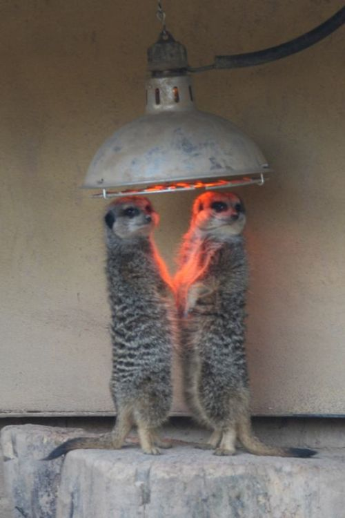 These Animals Just Want To Stay Warm This Winter (22 pics)