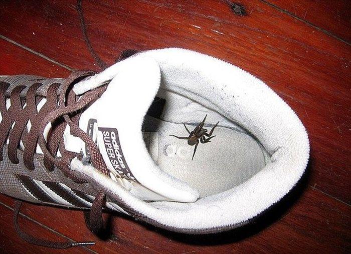 Australian Spiders Are The Worst (9 pics)