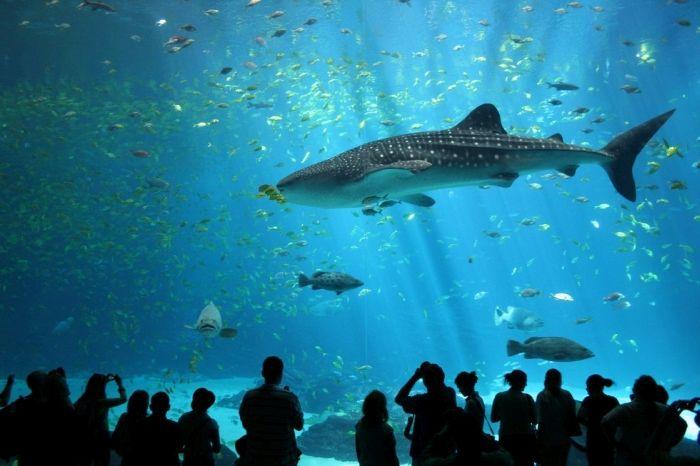 Kastrup Has The Most Amazing Aquarium (18 pics)