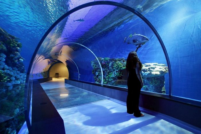 Kastrup Has The Most Amazing Aquarium (18 pics)