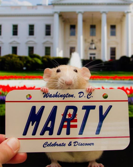 Hang Out With Marty The Mouse At The Marty Mouse House (28 pics)