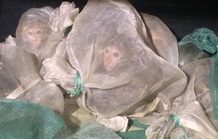 46 Live Monkeys In A Truck (3 pics)