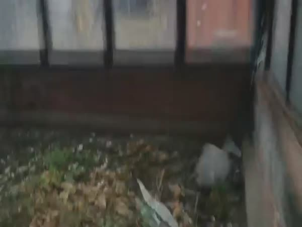 Cat Crashes Window