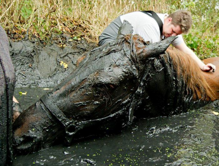 This Horse Was Not Having A Good Day (7 pics)