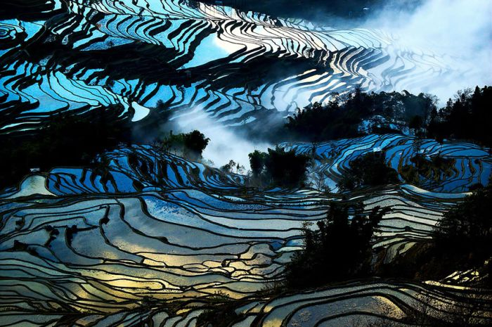 Rice Fields Look Amazing Through A Bird's Eye View (44 pics)
