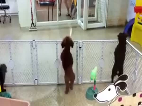 Dancing Puppy Waiting For Its Owner
