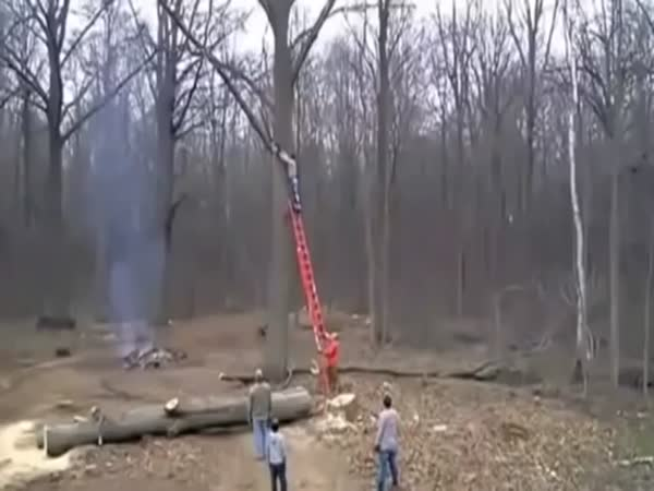 Tree Doesn't Want To Be Cut