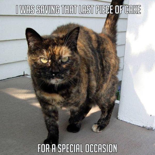 Sometimes Animals Make The Best Memes (23 pics)