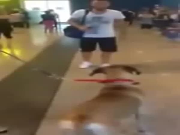 Dog Is Happy To Meet Its Owner